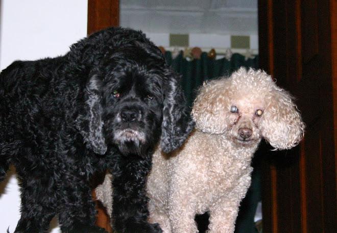 Max & Bailey