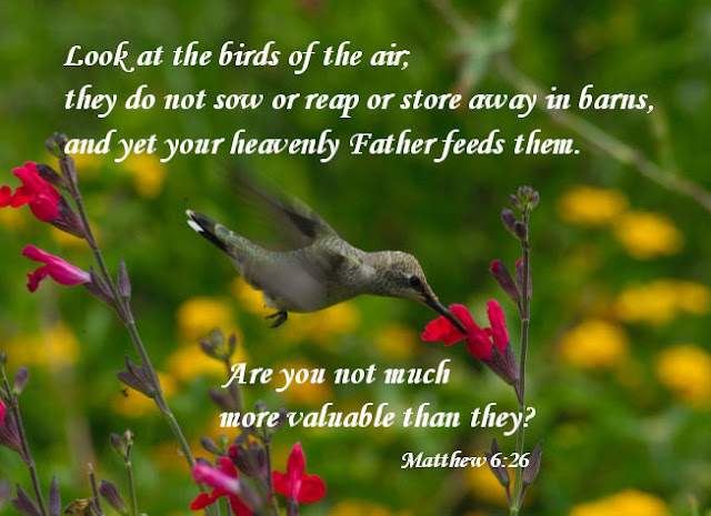 My notebook of bible story pictures matthew 6 26 look at the birds