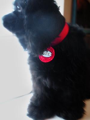 Purr Fect Paws Cat Rescue Yuba City Ca