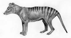 Lobo da Tasmânia