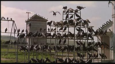 http://1.bp.blogspot.com/_IJudo2kB0rQ/TFksAnX3KQI/AAAAAAAAAr8/OIfKifhXlfg/s1600/birds+2.jpg