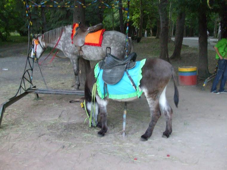 пони и лошадь