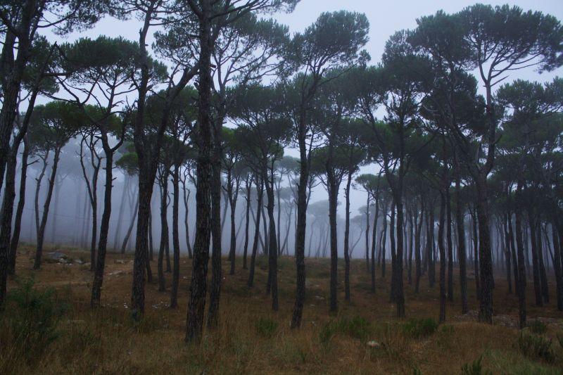 Bois de Boulogne  Metn  Lebanon ~ Bois De Boulogne Lebanon