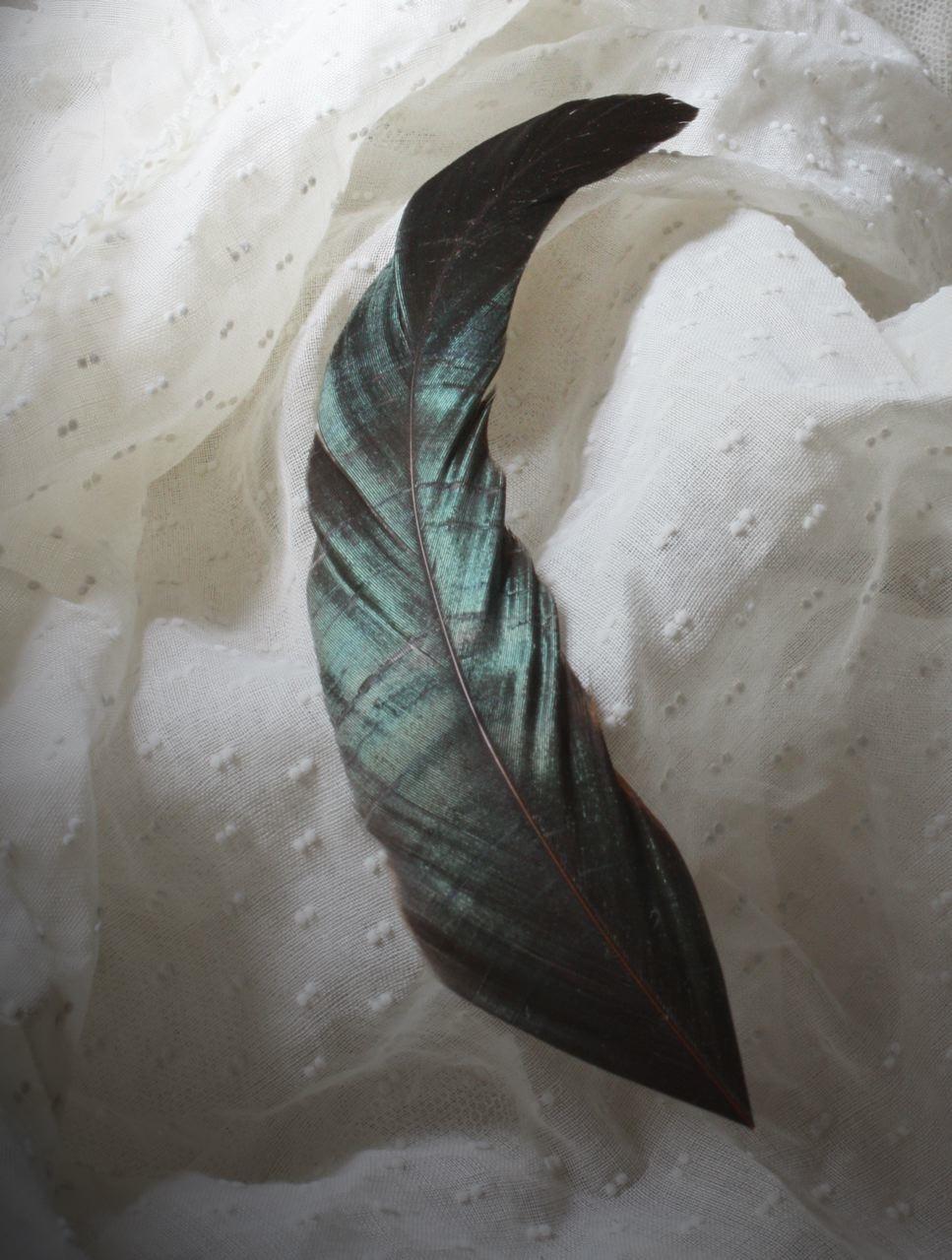 Festa do Chapéu Feather