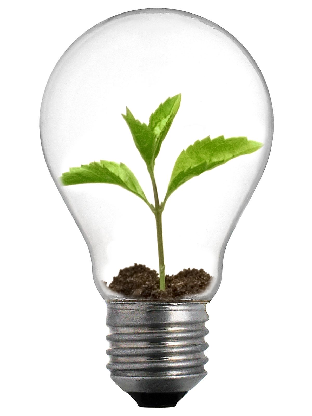 external image Sprout_Lightbulb.jpg