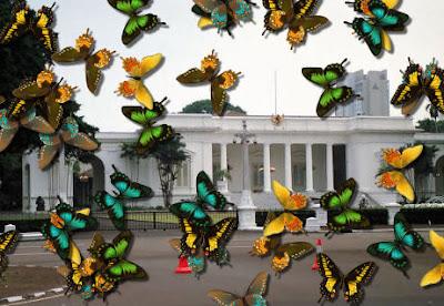 Kohabitasi Kupu-Kupu ke Istana Negara RI