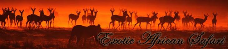 Exotic African Safari