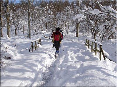 Paseando por el Bosque de Armentia