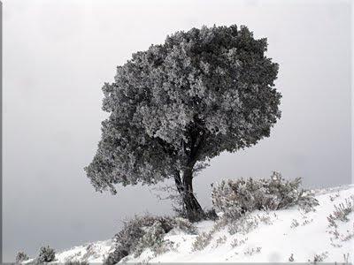 Belleza invernal