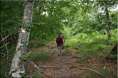 Ascendemos por el bosque