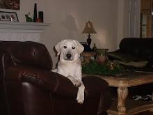 Davis the Dog