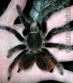 * Любителям пауков