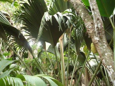 Parque Natural de los Cocos