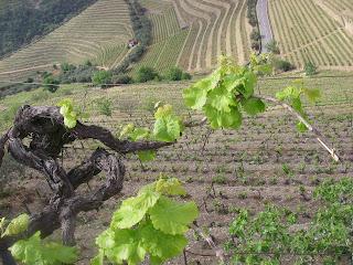 quinta de vinho do Douro