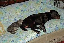 I due quando dormono