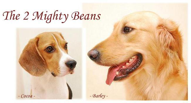 The 2 Mighty Beans