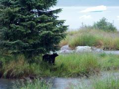Bear under tree