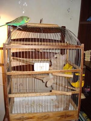 Olağandışı Arkadaşlar - kedi ve kuş - 15 Resimler