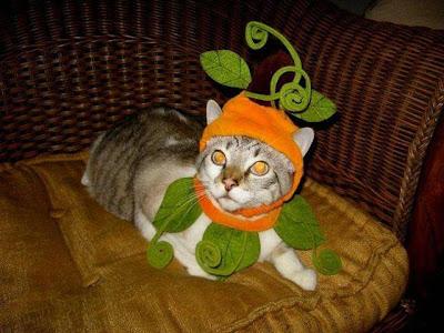 Komik Kedi yavruları - 14 Resimler