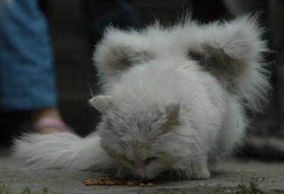 Kanatlı kedi - 05 Resimler