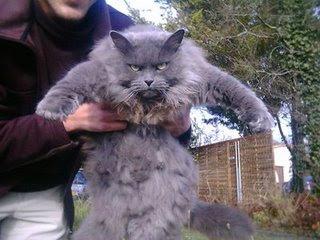Komik ' Underworld ' Cats - 17 Resimler