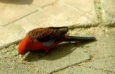 زیبا ترین گونه های طوطی در جهان