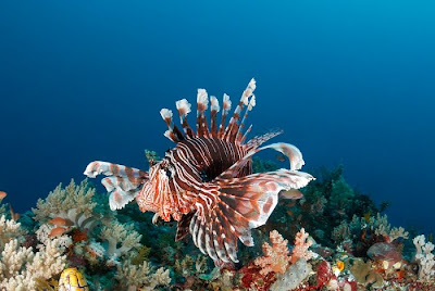 underwater sea creatures pictures