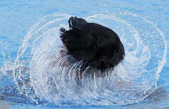 Precisa de cara feia pra mergulhar?