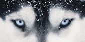 olhos que transmitem coragem