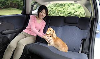 Vamos Dog Edition