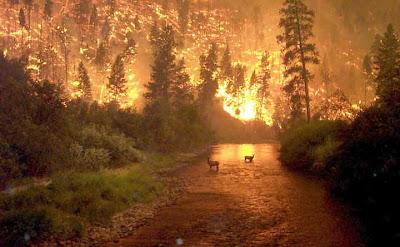 amazing natural disasters photos 05 - amazing natural disasters photos