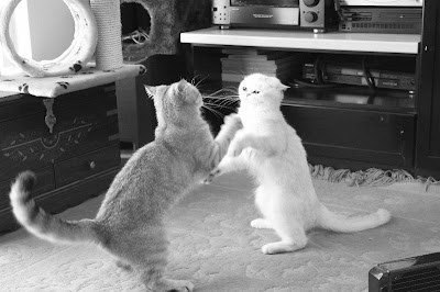 fighting cats!!! by _Xti_ from flickr (CC-NC)