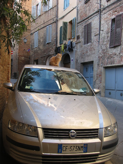 cat car by Friar's Balsam from flickr (CC-BY)