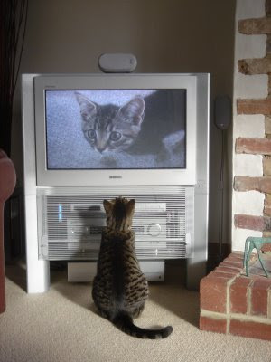Fatty watching himself on TV by cloudzilla from flickr (CC-BY)
