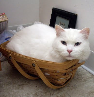 kitten in a basket by pixn8tr from flickr (CC-NC-SA)