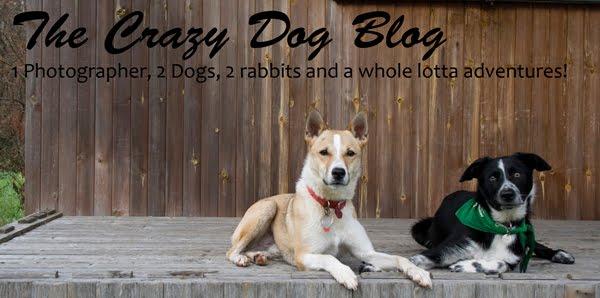 The Crazy Dog Blog