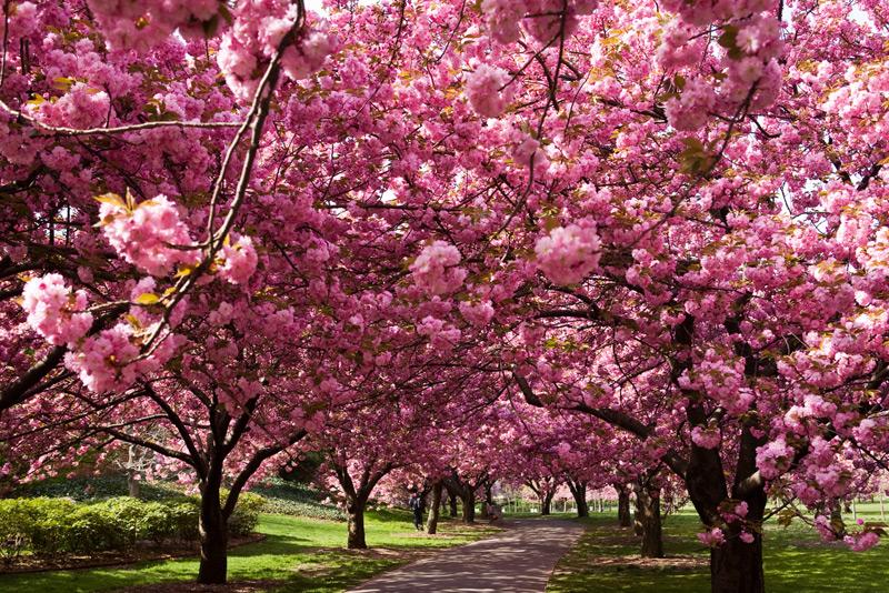 Shinkiespace paisajes de jap n for Arboles para jardin japones