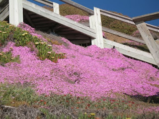 Pretty in pink on the cliffs