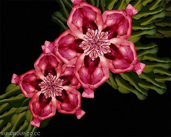 ARTE - Flores Humanas