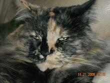 Taryn's cat