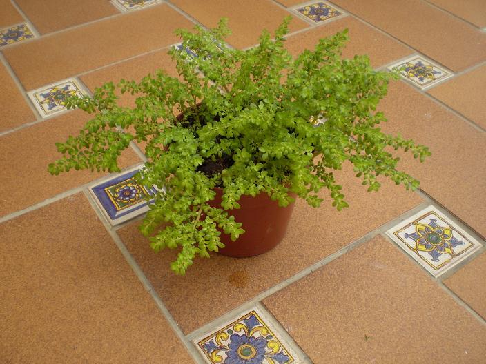 Las plantas sin flores  Cuidado de Plantas