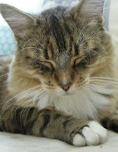 Hermine Katt Mathilde