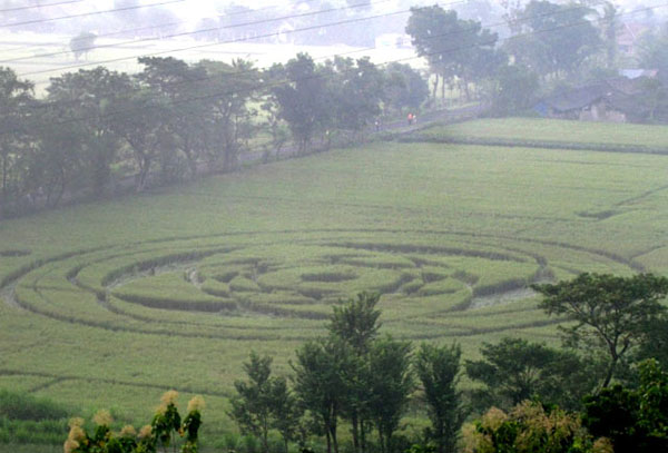 The appearance of crop circles in Sleman, Yogyakarta, has fascinated