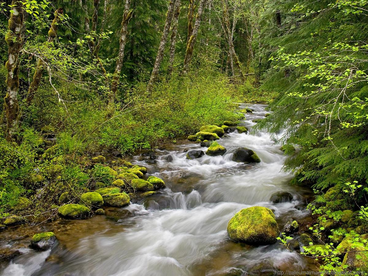 http://1.bp.blogspot.com/_IhlK3PA_5ow/TANeP4p8suI/AAAAAAAAAbo/DfUenT_kbt8/s1600/Still+Creek,+Mount+Hood+National+Forest,+Oregon.jpg