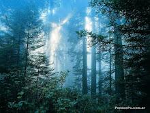 sombras en el bosque