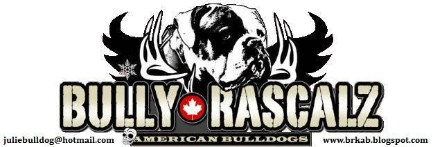 Bully Rascalz American Bulldogs