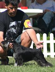 Lisboa Dog Show´07     CAC/CACIB-BOB: Mejor de Raza. Clasificado para Cruft´s 2008.
