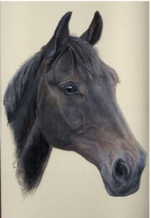 HORSE PORTRAITS<br>click the picture to visit my website Horse Portrait gallery