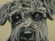 DOG PORTRAITS<br>click the picture to visit my website Dog Portrait Gallery page