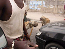 Nigerian Walking Hyenas